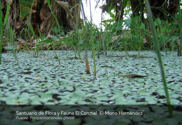 Santuario-de-Flora-y-Fauna-El-Corchal-El-Mono-Hernández