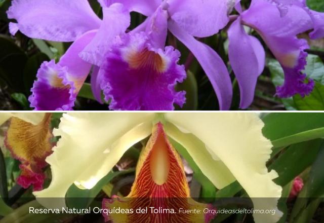 Reserva-Natural-Orquídeas-del-Tolima.jpg