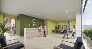 OLIVO imagen 4