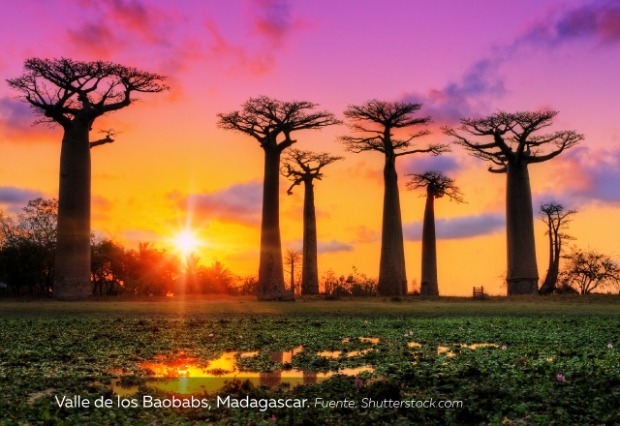 atardecer-en-valle-de-los-Baobabs-Madagascar.jpg