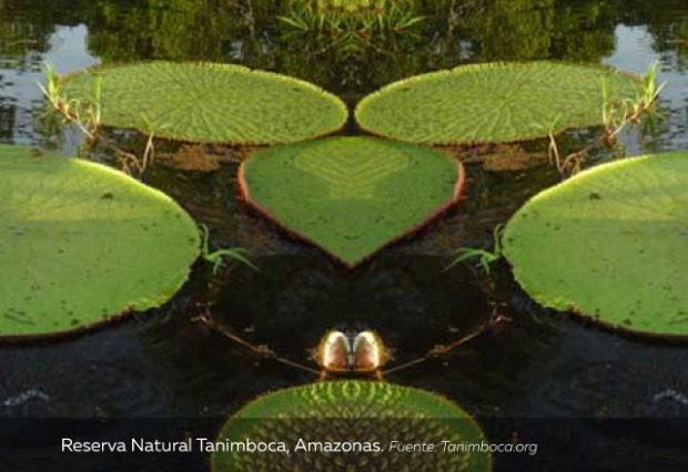 vacaciones-reserva-natural-tanimbocac-Amazonas.jpg