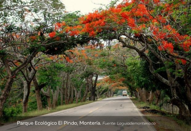 Parque-Ecológico-El-Pindo-Montería.jpg