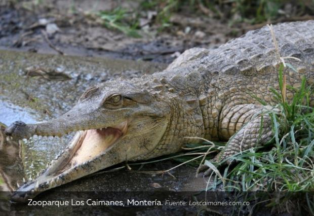 Zooparque-Los-Caimanes-Montería.jpg