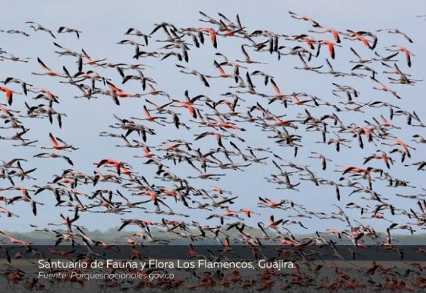 Santuario-de-Fauna-y-Flora-Los-Flamencos-Guajira.jpg