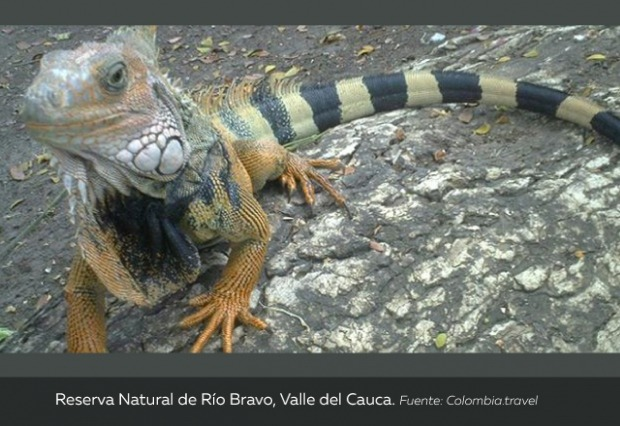 Reserva-Natural-de-Río-Bravo-Valle-del-Cauca.jpg